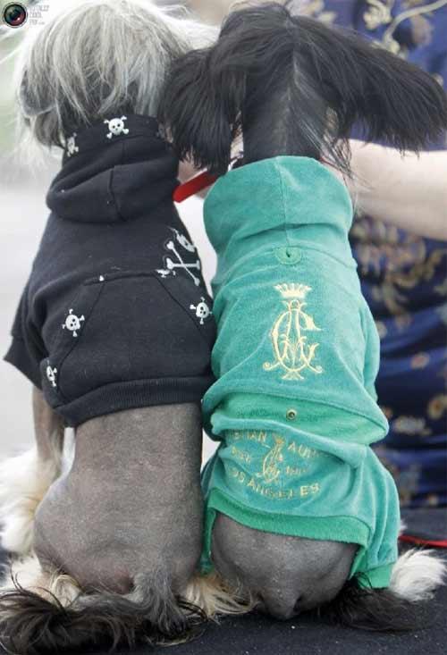 Mặc áo đẹp cho cún - 8