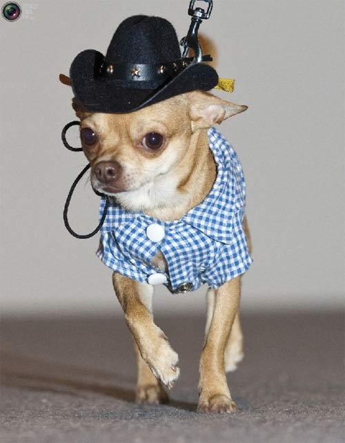 Mặc áo đẹp cho cún - 9