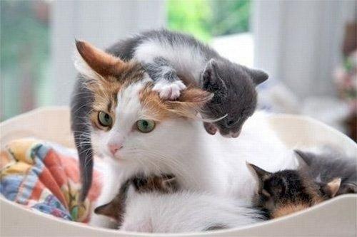 10 chú mèo ngộ nghĩnh của năm Tân Mão - 1