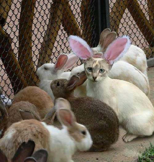 10 chú mèo ngộ nghĩnh của năm Tân Mão - 3