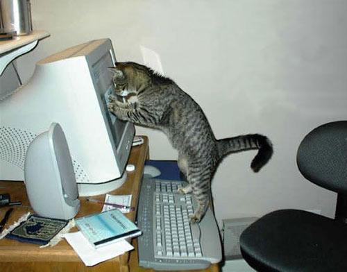 10 chú mèo ngộ nghĩnh của năm Tân Mão - 5