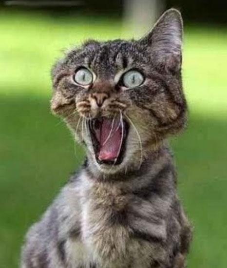 10 chú mèo ngộ nghĩnh của năm Tân Mão - 7