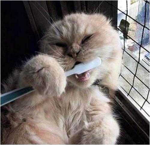 10 chú mèo ngộ nghĩnh của năm Tân Mão - 8
