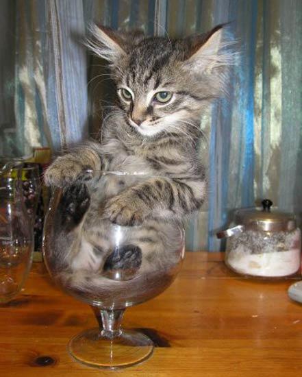 10 chú mèo ngộ nghĩnh của năm Tân Mão - 10