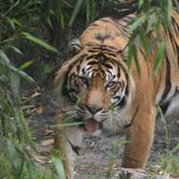 Đắk Lắk: Trẻ sơ sinh bị thú rừng ăn thịt