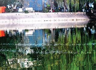 Hồ Gươm có ít nhất 2 cụ Rùa? - 1