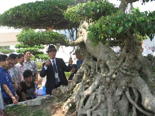 Truyền kỳ lăng mộ lớn nhất Việt Nam - 1