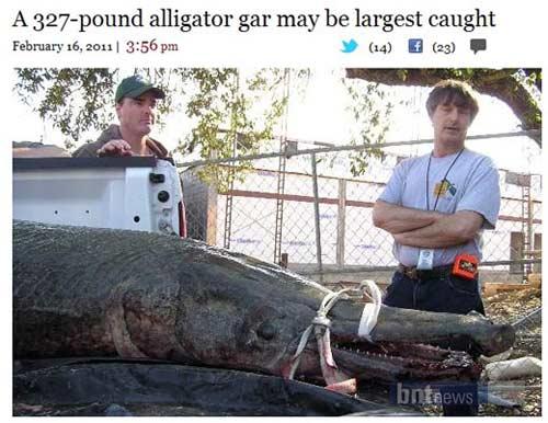 """Bắt được cá sấu hỏa tiễn """"bự"""" nhất - 1"""