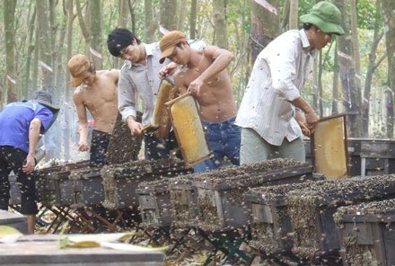 Chùm ảnh: Thu mật ong mùa lá rụng - 1