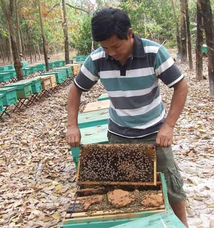 Chùm ảnh: Thu mật ong mùa lá rụng - 3