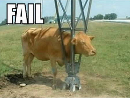 Những hành động ngộ nghĩnh của động vật - 6