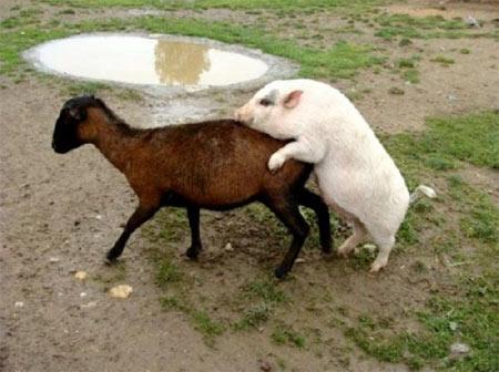 Những hành động ngộ nghĩnh của động vật - 12