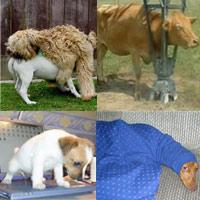 Những hành động ngộ nghĩnh của động vật