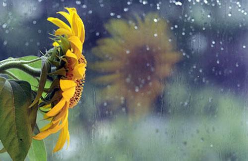 Thơ tình: Giữa chiều mưa kỷ niệm - 1