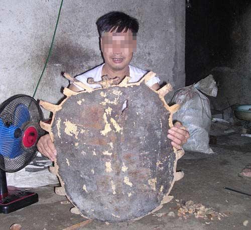 Sức mạnh phi thường của Rùa khổng lồ - 4