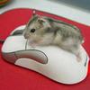 Xin lỗi, anh chỉ là con... chuột!