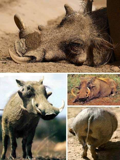 Những con vật có hình thù quái dị nhất - 1