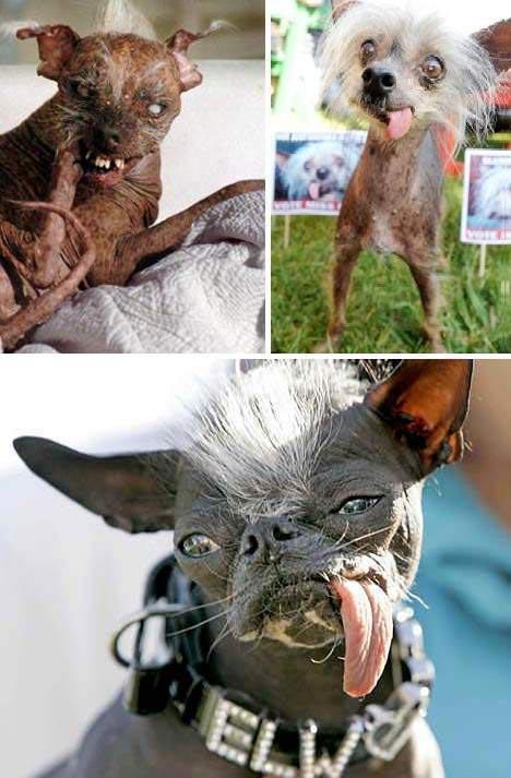 Những con vật có hình thù quái dị nhất - 12