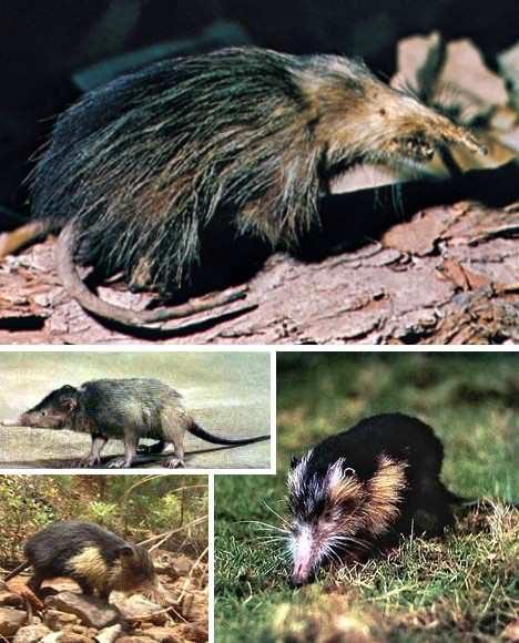 Những con vật có hình thù quái dị nhất - 13