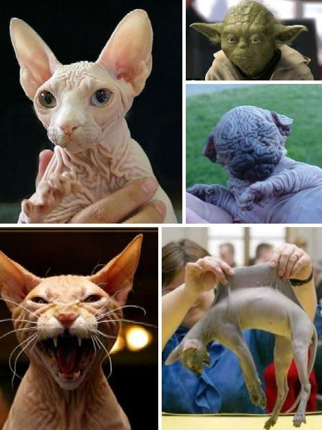 Những con vật có hình thù quái dị nhất - 5