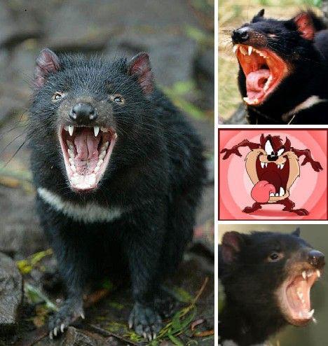 Những con vật có hình thù quái dị nhất - 9
