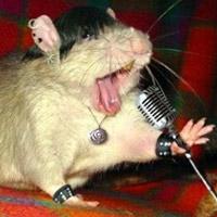 Video clip hài: Nuôi chuột trong giày