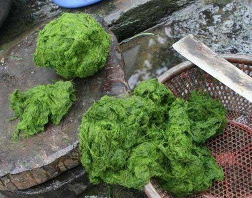 Lạ lùng món rêu - 4