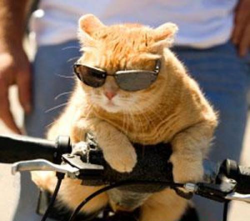 Cuối năm Mão nghe Mèo tâm sự - 8