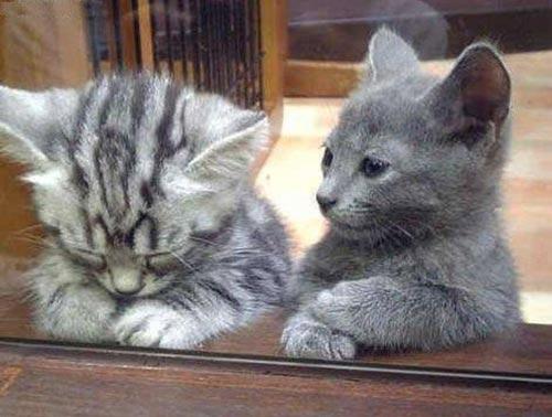 Cuối năm Mão nghe Mèo tâm sự - 1