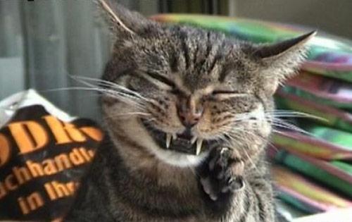 Cuối năm Mão nghe Mèo tâm sự - 2