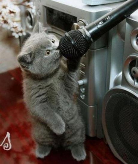 Cuối năm Mão nghe Mèo tâm sự - 7