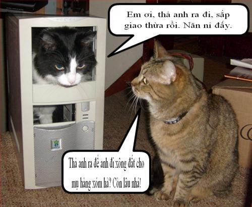 Cuối năm Mão nghe Mèo tâm sự - 13