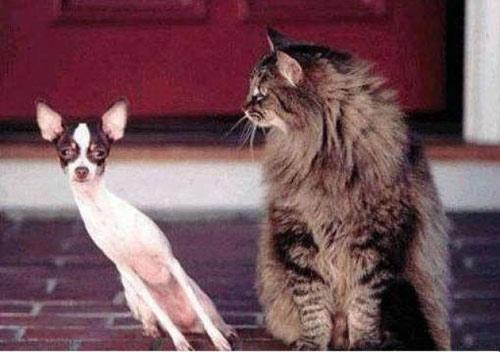 Cuối năm Mão nghe Mèo tâm sự - 12