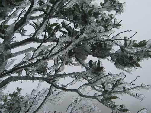 Tết dương lịch, Việt Nam có thể có tuyết - 1