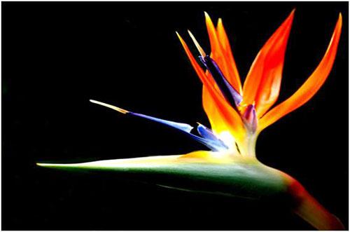 10 loài hoa đẹp nhất thế giới - 3