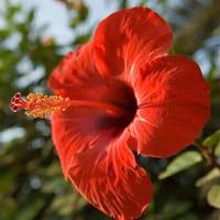 Ngẩn ngơ trước những bông hoa dại VN