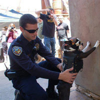 Video clip hài: Cảnh sát thích gạt mũi