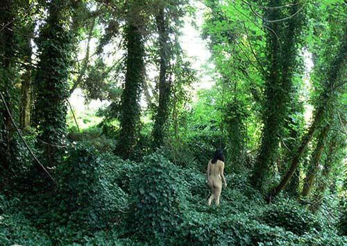 """Khu rừng """"tắm tiên"""" tại Hàn Quốc - 1"""