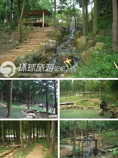 """Khu rừng """"tắm tiên"""" tại Hàn Quốc - 4"""