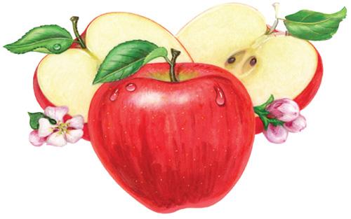 Tác dụng giảm cân thần kỳ của dấm táo - 1