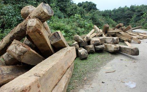 Vụ phá rừng lớn chưa từng có tại Hà Tĩnh - 1