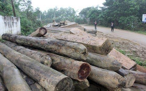 Vụ phá rừng lớn chưa từng có tại Hà Tĩnh - 5