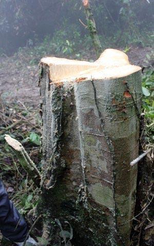 Vụ phá rừng lớn chưa từng có tại Hà Tĩnh - 6