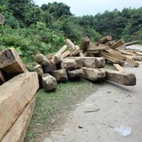 Vụ phá rừng lớn chưa từng có tại Hà Tĩnh