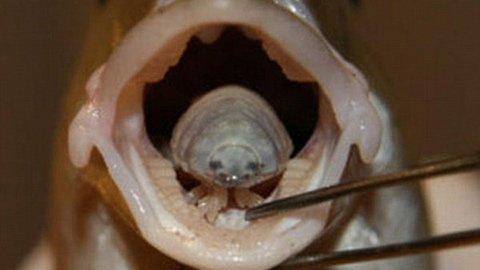 Quái vật chuyên ăn lưỡi nạn nhân - 1