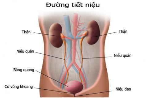 Kỹ thuật mới điều trị són tiểu - 1