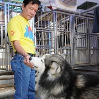 Đại gia Sài Gòn bỏ nửa tỷ mua chó kéo xe