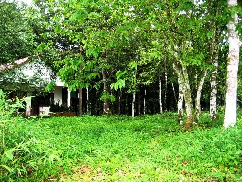 Kinh nghiệm du lịch rừng Cúc Phương - 1