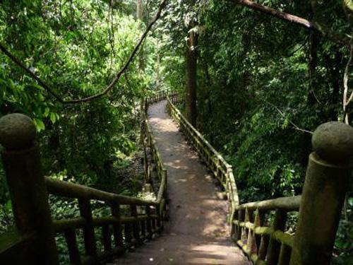 Kinh nghiệm du lịch rừng Cúc Phương - 2