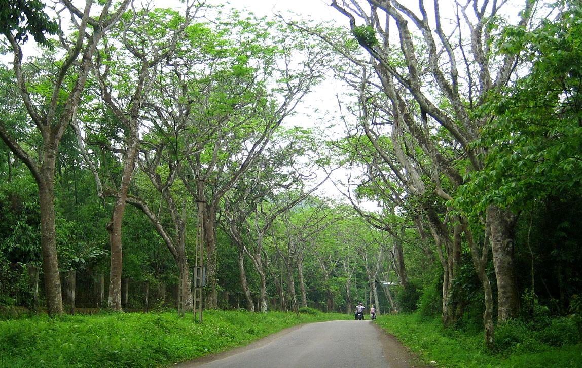 Kinh nghiệm du lịch rừng Cúc Phương - 3